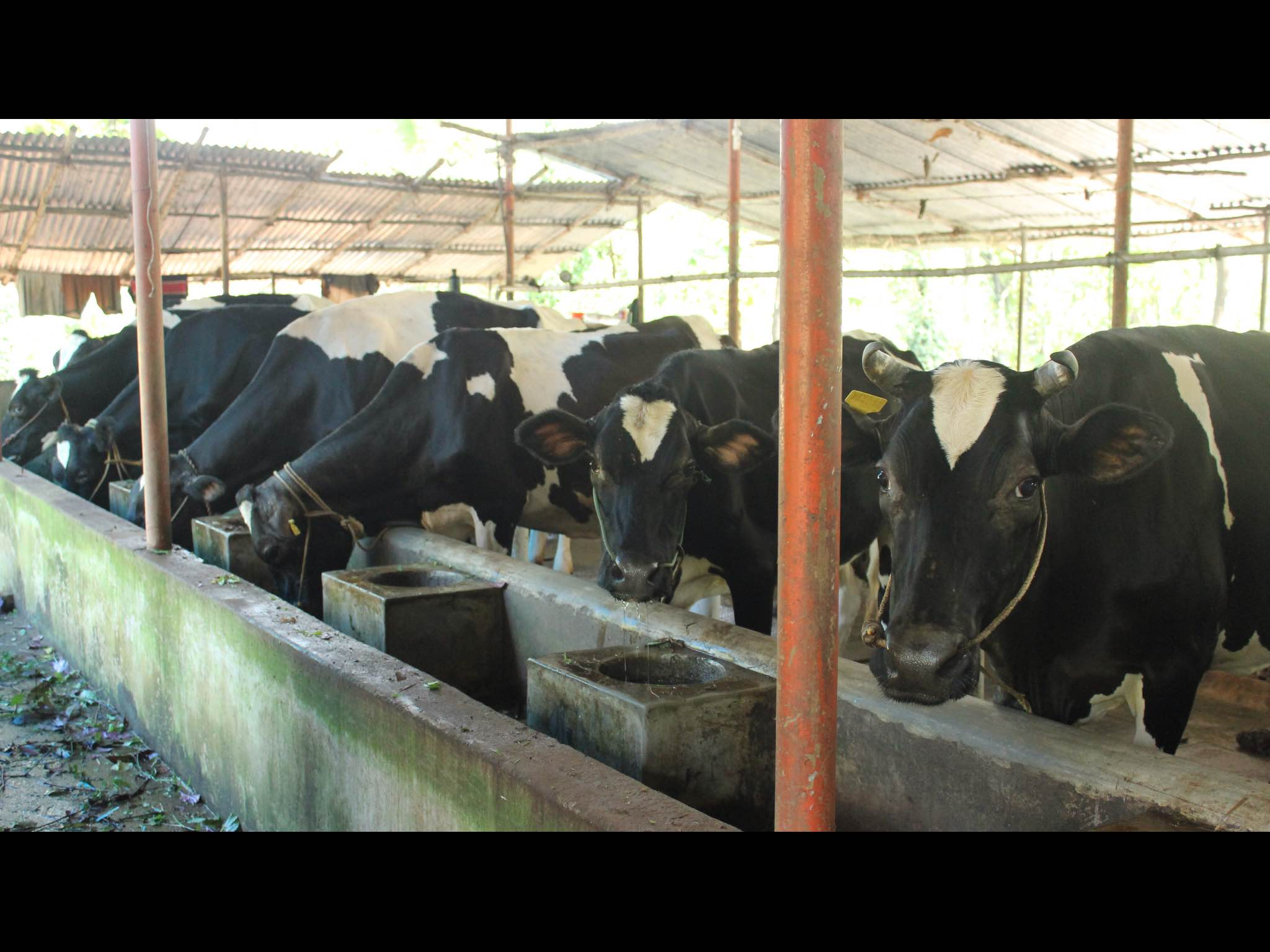 best_icecream_kerala_milk_farm_3.jpg